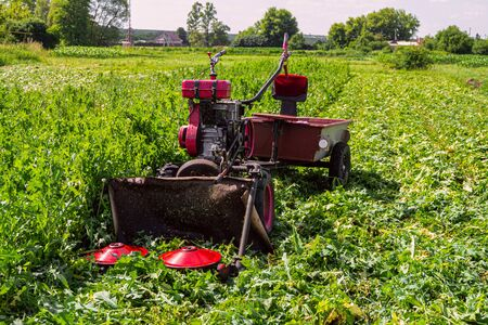 Walk-behind tractor with disc plates grass cutter. Grass mowing process. Stock Photo