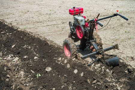 Walk-behind tractor in the garden. Cultivator with plow makes furrow in soil for potato plantation.