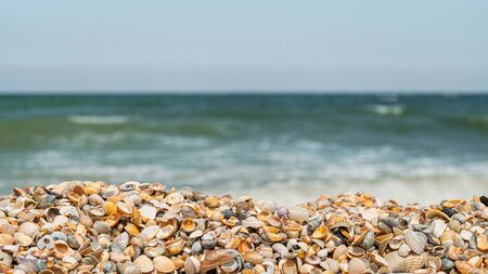 Coastal seashells on the seashore on a sunny day. Panoramic wide angle size photo (16:9). Selective focus on seashells.