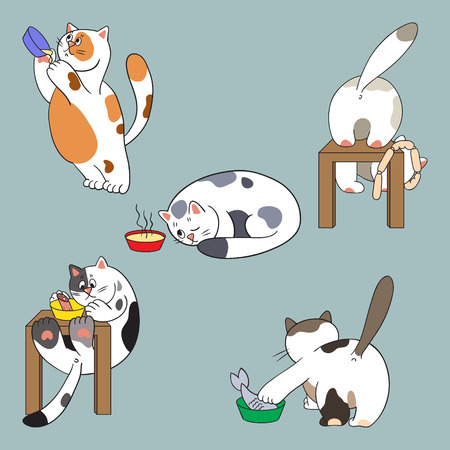 Cats and food collection Vector