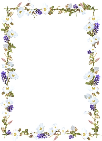 grens: Paars gember en witte lucht bloem wijnstok grens op een witte achtergrond Stockfoto