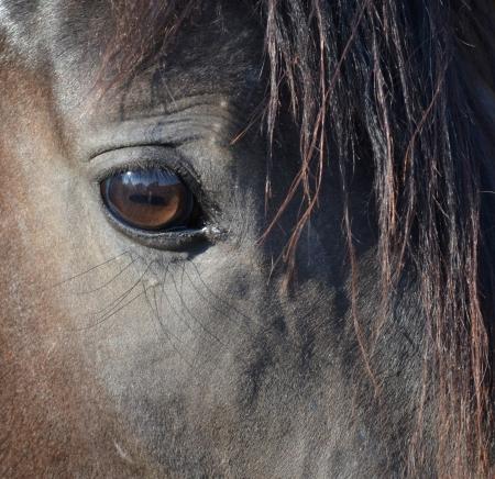 cabeza de caballo: Cerca de Caballo Foto de archivo