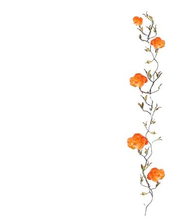 Orange Rose Border Isolated on White