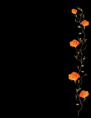Orange Rose Border Isolated on Black photo