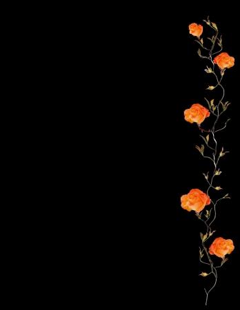 Orange Rose Border Isolated on Black Фото со стока