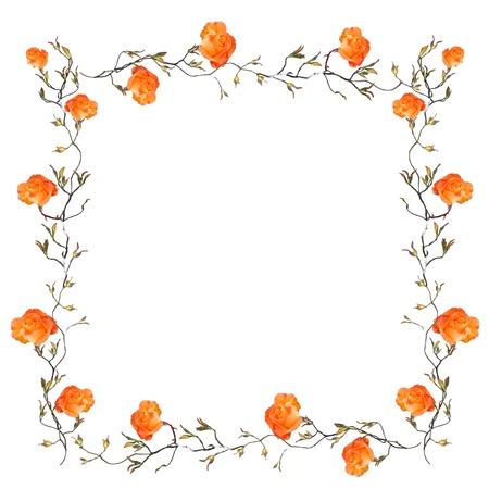orange rose: Orange floral border with white copy space