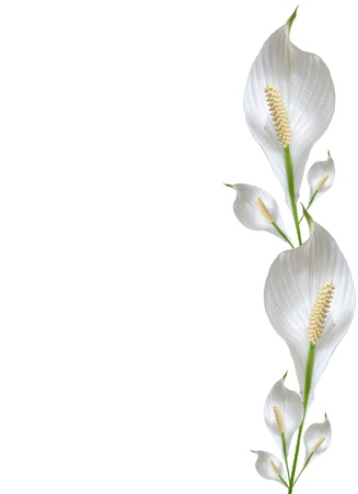 White floral border with copy space Stock Photo