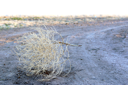 Tumbleweed on a Country Road