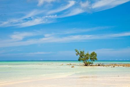 ハヴロック島、アンダマンおよびニコバル諸島, インドの手付かずのビーチ。