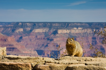 Squirrel at Grand Canyon Stock Photo - 13659323