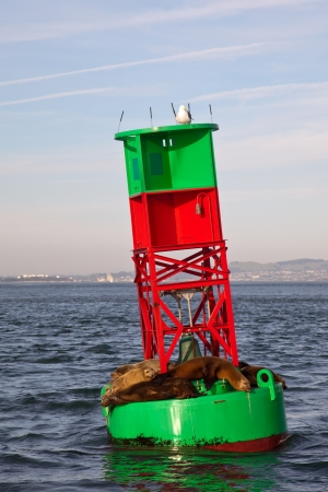 Sea lions on a navigational buoy in the San Francisco Bay, California. Stock Photo - 14575355