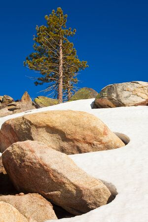 Lone tree at Smith Peak in Yosemite National Park, California. photo