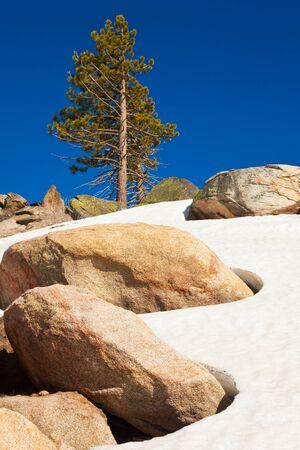 Lone tree at Smith Peak in Yosemite National Park, California. photo