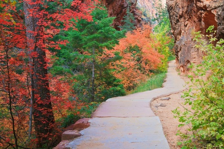 zion: Path through Refrigerator Canyon towards Angels Landing in Zion Canyon National Park, Utah.