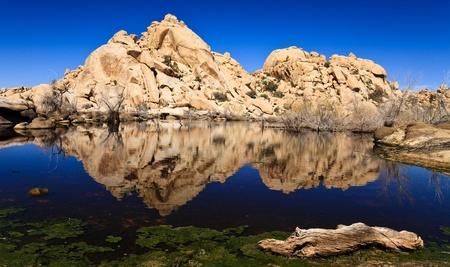 joshua: Reflections at Barker Dam in Joshua Tree National Park, California.
