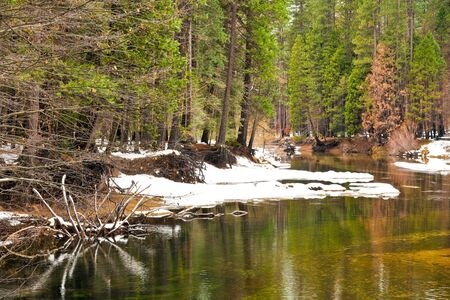 sierra snow: Forest along the Merced River in Yosemite National Park, California.