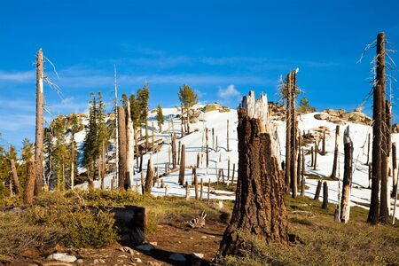 sierra snow: Trail through burnt forest at Smith Peak, Yosemite National Park.