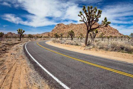 joshua: Desert road in Joshua Tree National Park, California
