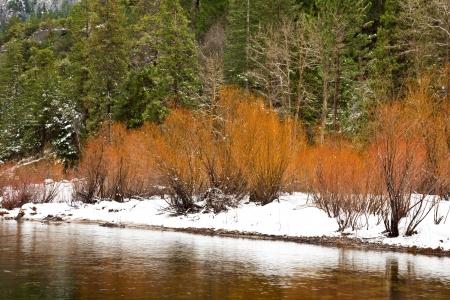 merced: Merced river bank in winter at Yosemite National Park, California.