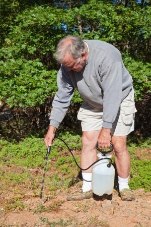 Senior man killing poison oak and mountain misery in the yard  Stock Photo - 15044600