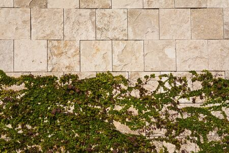 overrun: Ivy on a wall Stock Photo