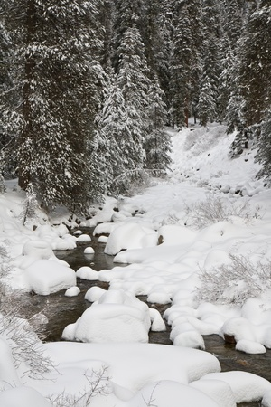 black and white forest: Forest creek in Sequoia National Park, California.