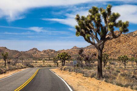 joshua: Road through Joshua Tree National Park, California. Stock Photo