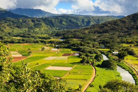 Taro fields in Hanalei Valley, Kauai. Stock Photo