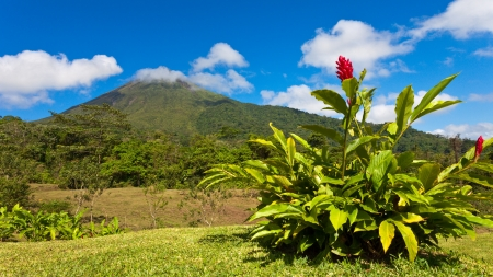 The green side of Arenal Volcano in Costa Rica. Stock Photo