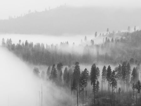 Beautiful scene of a forest covered by low clouds in Yosemite National Park, California. Stock Photo - 16802624