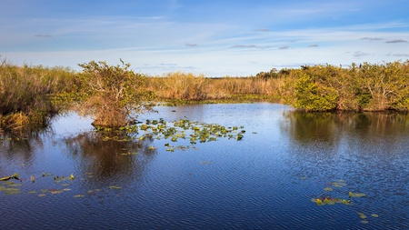 sawgrass: panorama of marshes along the Anhinga Trail in Everglades National Park, Florida.