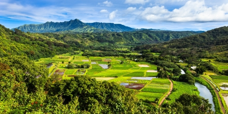 Taro fields in beautiful Hanalei Valley, Kauai  Stock Photo