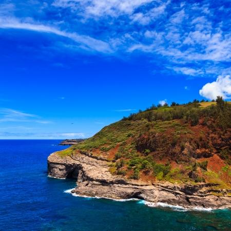 kilauea: Bird nesting colony at Kilauea lighthouse bay in Kauai, Hawaii Islands