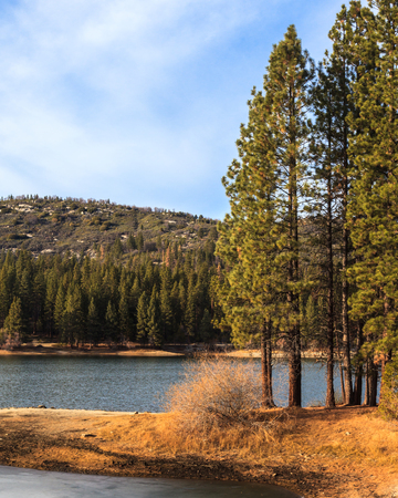 ponderosa pine winter: Lake Hume in Sequoia and Kings Canyon National Park, California