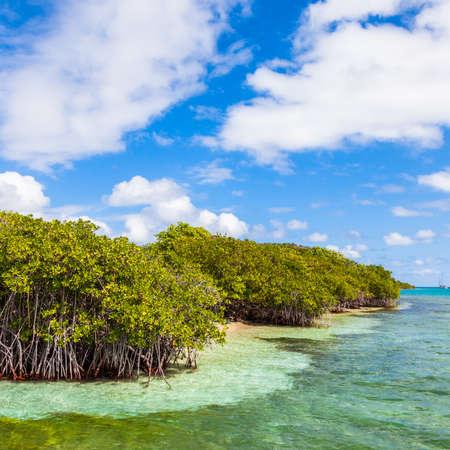 Mangroves in the British Virgin Islands.