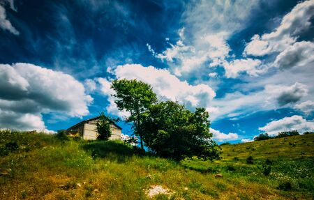 A rich summer landscape, a field with a lonely hut and a tree nearby. Bright colours.
