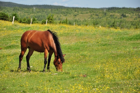 horse grazing in grassy field