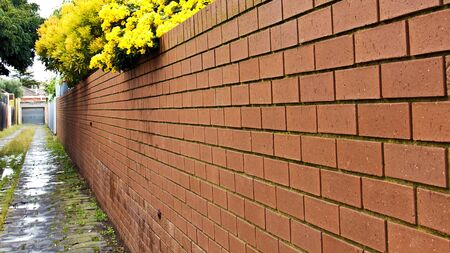 Red brick garden fence with yellow flower and empty street photo