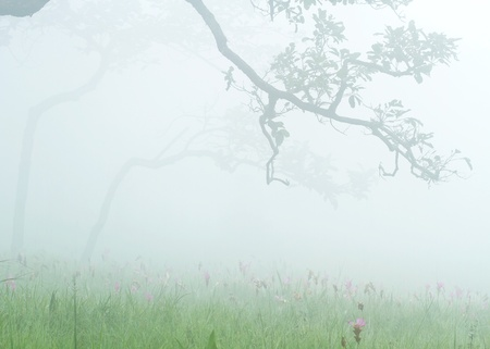 Morning fog and a forest over on grassland and purple flower photo
