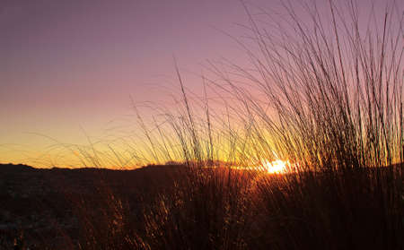 Brown grass brush over sunset background photo