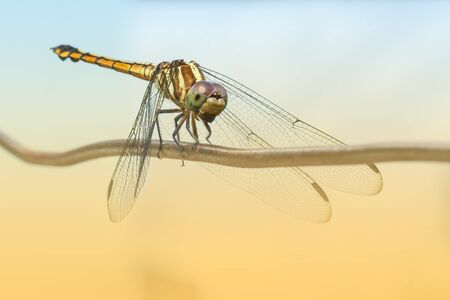 Yellow dragonfly setting on iron wire with soft background style photo