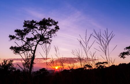 Pine trees and grass in silhouette at sunset growing on a hillside photo