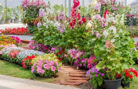 Brick walkway with beautiful flowers on side in flower garden Standard-Bild