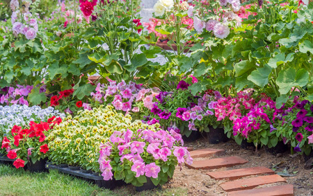 Brick walkway with beautiful flowers on side in flower garden Stock Photo