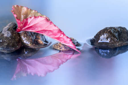 reflection of life: Still life with macro of Red begonia lucernae leaf with stones reflection