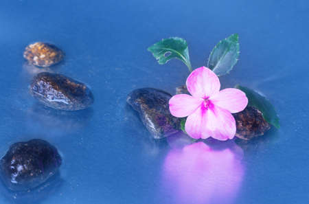 reflection of life: Still life with macro of pink impatiens walleriana flower with stones reflection