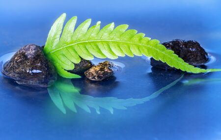 reflection of life: Still life with macro of green fern leaf with stones reflection Stock Photo
