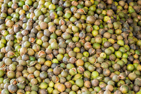 nut shell: Pile of fresh macadamia nuts and nut shell background Stock Photo