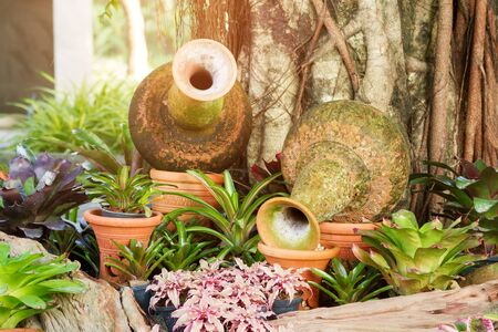 cryptanthus: Clay pitcher of water decorate with colorful bromeliad plants in beautiful garden