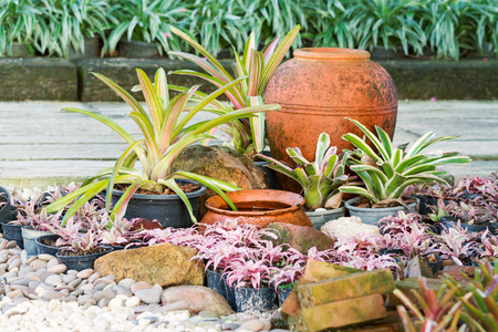 cryptanthus: Clay jar of water decorate with colorful bromeliad plants in beautiful garden Stock Photo